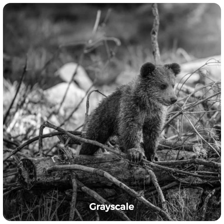 Grayscale image filter example