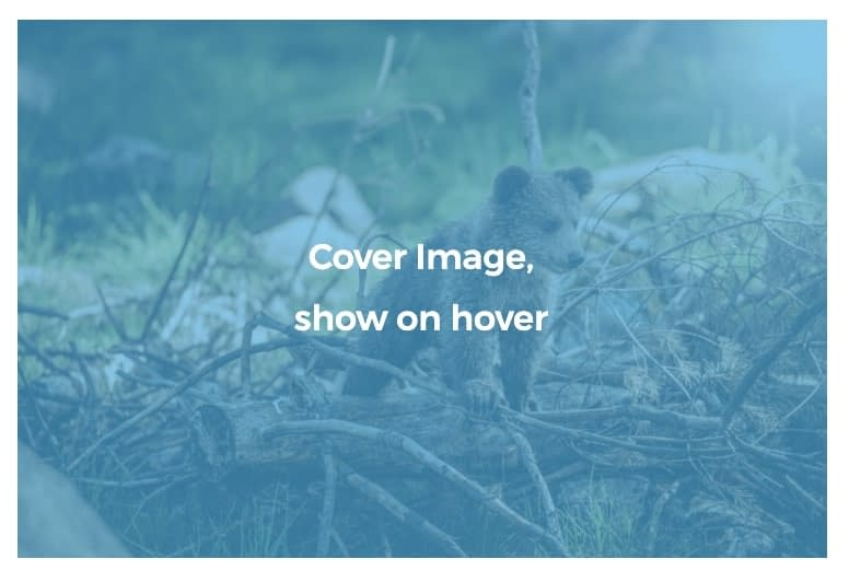 Example of Kadence Blocks Gallery with caption covering image and showing on hover.